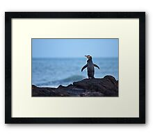 Yellow-eyed Penguin - New Zealand Framed Print