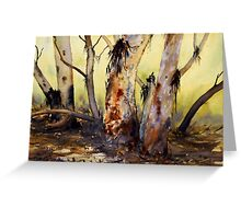 River Red Gum, Flinders Ranges, South Australia Greeting Card