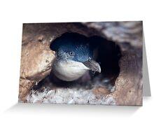 Blue Penguin - New Zealand Greeting Card
