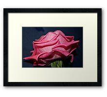 Plump & Pink Framed Print