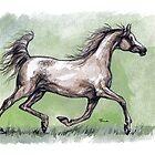 grey  arabian horse by tarantella
