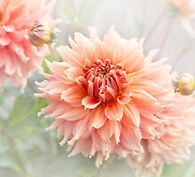 Dahlia 'Fairway Spur' by Jacky Parker