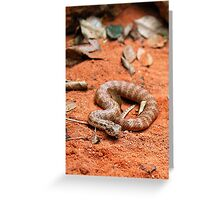 Death Adder Greeting Card