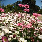 King's Park Wildflowers by Travel-Hop