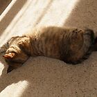 It's a Cat's Life!! by MichelleRees