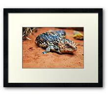 Shingleback Lizard Framed Print