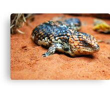 Shingleback Lizard Canvas Print