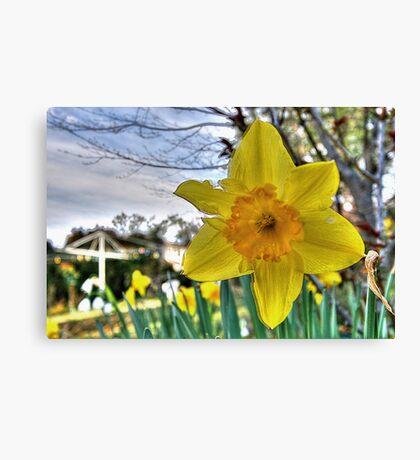 Narcissus Glory Canvas Print
