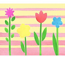 Flower Bed On Baby Pink Photographic Print