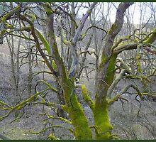 Shrouded in Mossy Green by HELUA