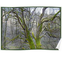 Shrouded in Mossy Green Poster