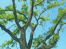 Ancient Walnut Tree by MotherNature