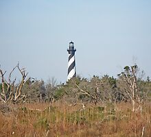 Cape Hatteras Lighthouse - Outer Banks NC by MotherNature