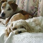 Do you think if we lay real still mum wont see us and tell us to get off? by chrissy mitchell