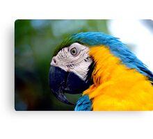 Parrot II Canvas Print