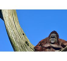 King Of Orang Utans Photographic Print