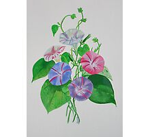 A Morning Glory Photographic Print