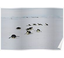 Emperor Penguins at Snow Hill Island, 10/10 Poster