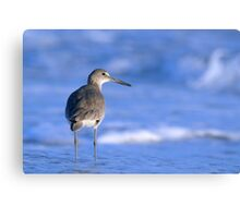 Willet in the Water Canvas Print