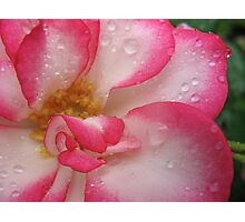 Amusing rose Photographic Print