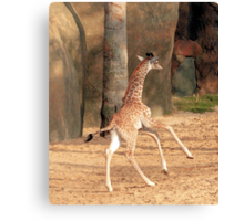 Check Out These Moves Canvas Print