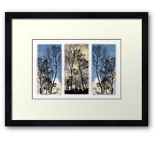 Tryptic Trees Framed Print