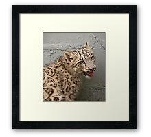 Young Snow Leopard  Nina Framed Print