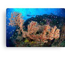 Barney's reef Canvas Print