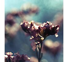 the whispers of spring Photographic Print
