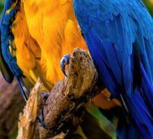 Blue Macaw Sticker