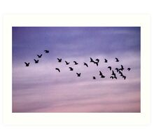 Birds of a feather flock together Art Print