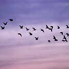 Birds of a feather flock together by Luci Mahon