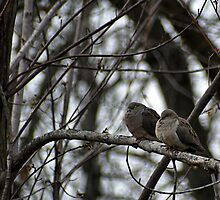 Two Doves by astonishann