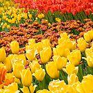 Tulipmania by Marilyn Cornwell