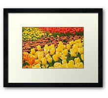 Tulipmania Framed Print