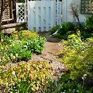 A Study:  Garden Gates by Marilyn Cornwell