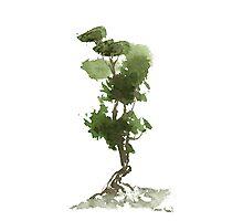 Little Zen Tree 186 Photographic Print