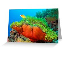Anemone with Pink Anemone Fish Greeting Card