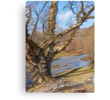 Willow Wood and Water Canvas Print