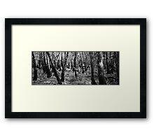 Spot the deer Framed Print