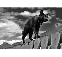 Cat on a Mission Photographic Print