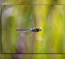 Dragonfly Flying by Capt. Charles McKelroy