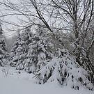 Winter Wonderland  Kettle Creek, Belmont Ont Canada by creativegenious