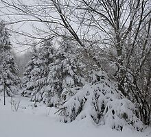 Winter Wonderland  Kettle Creek, Belmont Ont Canada by creativegenious