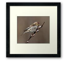 Spring is in the Air (Carduelis flammea - Common Redpoll) Framed Print