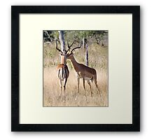 Look Buddy, This Is My Territory ! Framed Print