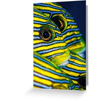 Eyes and Stripes Greeting Card