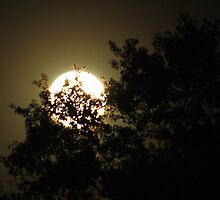 Super Moon by AuntDot