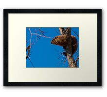 Groundhog up a Tree Framed Print