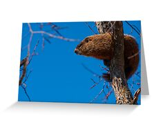 Groundhog up a Tree Greeting Card